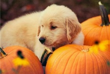 Puppy / by A I