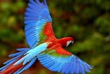 colourful birds