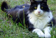Frimousses de chats / les miens, les autres, les chats de Venise