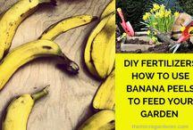 Benefits from bananas in the garden