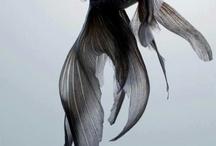 beautiful ゚・*:.。❁