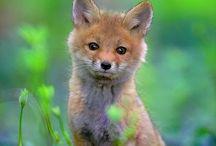 Photos / Photos of animals