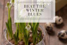 Indoor Planting / Gardening, indoor plants, indoor planting ideas