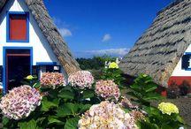 MADEIRA -  insula viu colorata a Europei!