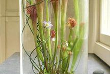 Növény terráriumok