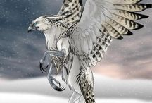 Griffin/Gryphon/Griffon