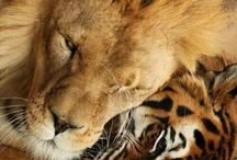 tigri/leoni