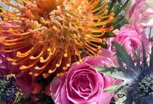 Composizioni floreali - Fiori freschi / Ricca selezione di composizioni floreali con fiori freschi con la rete metallica da pollaio
