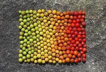 Inspiración La Floreria | Landart | Arte en el Campo / Intervenciones en espacios naturales, con materiales encontrados en el mismo y un concepto artistico.