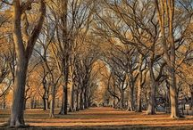 NYC _ Landscapes