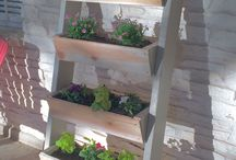 DIY Herbs, plants BOXED