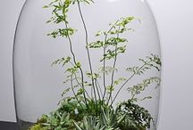 Gardening-Indoor & Out / by Donna Moore