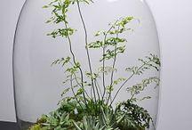 флорариумы