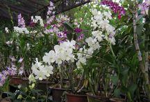 Plants, Flowers and Flower Arrangements / by MC Bautista