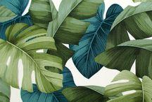 inspiration for tropical designs