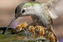 Kolibri/Hummingbird  2018
