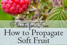 GROW FRUITS / GROW FRUIT, gardening, FRUITS