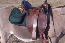 Australian saddle fit