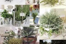 Herbs as wedding inspiration