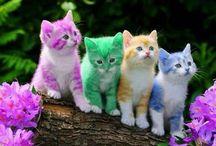 Košišky :3 / Zde budou všemožné kočičky,snad potěší :)