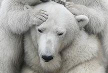 animais admiraveis urso