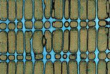 Blue decorative finishes