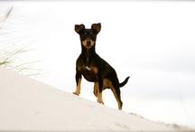 My lovely dog Yuna