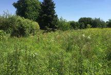 My Garden flagstone path / Ścieżka w ogrodzie