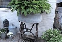 Planter i urner og div