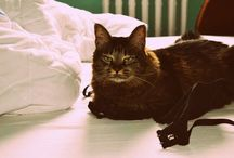 Cats / cats cats cats , cats everywhereeee  caaaaaaaatssss