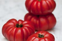 tempting tomatoes