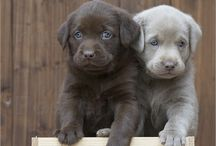 Puppies!! / Cutest pups ever