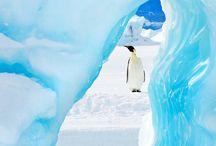 Antartica or Artic Poles