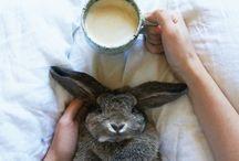 omg  bunny
