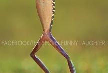 Frogs / by Deborah Rieger