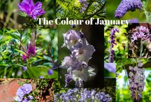 Flowers of 2015 / Colours and flowers of the month