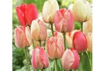 Spring Planting Bulbs / It is that time of year when you plant your bulbs for beautiful Spring flowers. http://www.bloomingsecrets.com/blog/when-is-it-too-late-to-plant-spring-bulbs