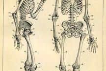 Bones and skulls