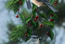 Fåglar / Vackra Fåglar av alla sorter.