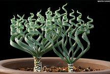 spiral succulents and cucti / guruguru
