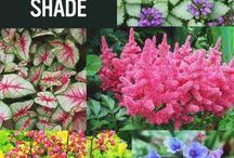 shade plants