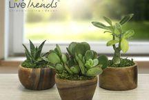 Copenhagen Acasia Wood Planters / Copenhagen Acacia Wood Cylindrical Planters with Live Plants
