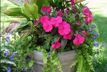 Plant pot Creations