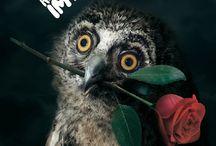 owls / by Cassie Davis