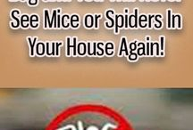 Mice and spiders