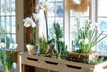 Paperwhites.....Spring in Winter! / by Cathy Newberry Horne