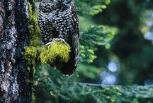 Enticing Wild Animals / Beautiful creatures of the wild