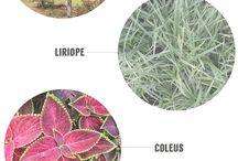 gardening tips / Gardening Tips