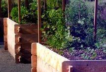 Záhradkárstvo-novodobe sadenie