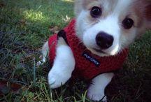 Adorable puppy's
